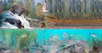 Aquarium Sketch
