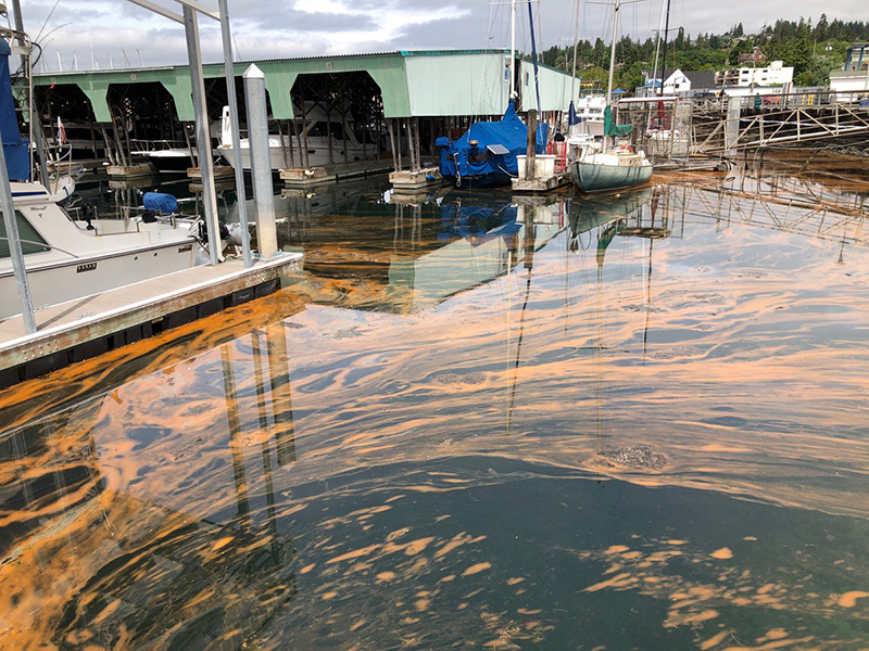 Puget Sound has a Nitrogen Problem — It's Time to Upgrade our Sewage Plants